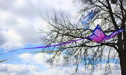 streaming_butterfly_by_xander_jara